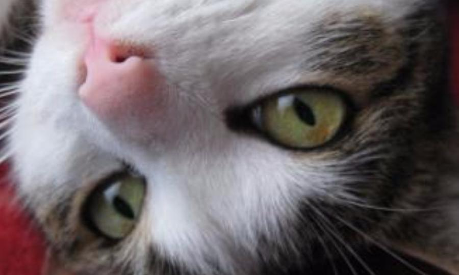 Жителя Котласа обвиняют визуверском убийстве кошки